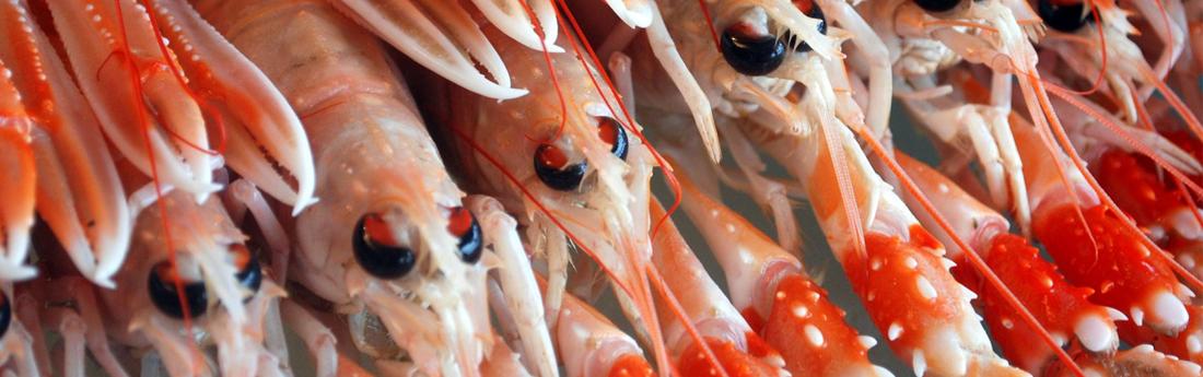 SFF Pelagic Fisheries